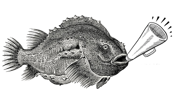 Blow fish with horn